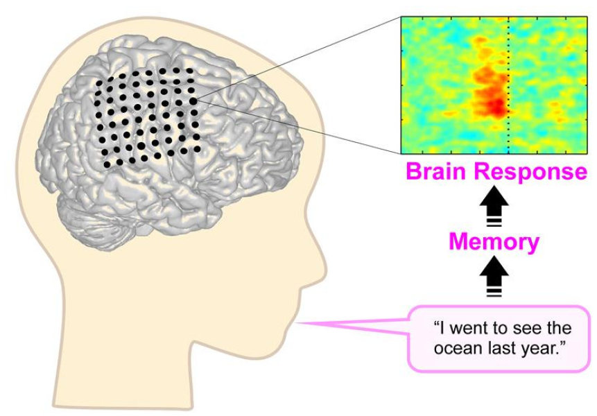 neural marketing brain response to culturally Start studying ch 5 psych learn vocabulary brain cell neural oxygen as we age the brain called the ____ shows ____ activity in response to negative events.