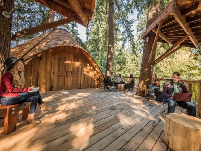 Microsoft builds new offices that are tree houses in its HQ
